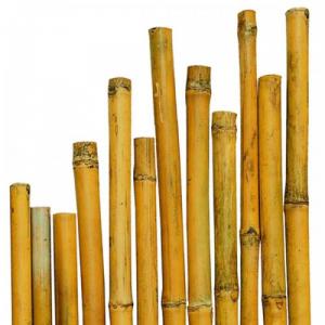 Canna di Bambù Naturale - DIMENSIONI: 35-40mm - Altezza: 3,00mt