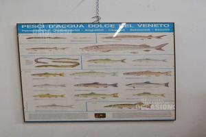 Stampa Dei Pesci Di Acqua Dolce Del Veneto Modello 1