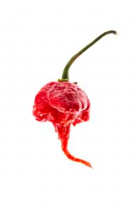 Composta frutti di bosco e Carolina reaper