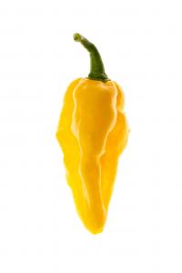 Seasoning Naga Yellow